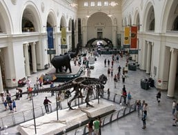 Image of The Field Museum