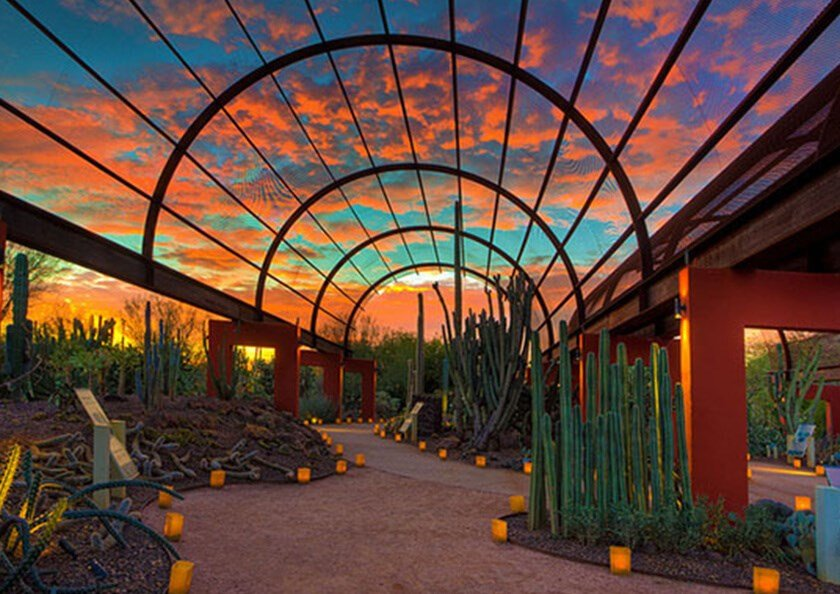 Image of Desert Botanical Garden