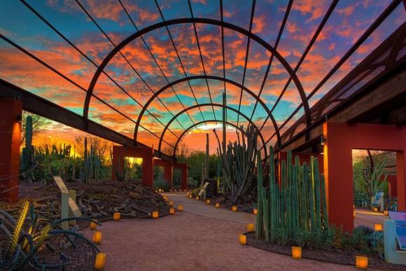Beau About Desert Botanical Garden