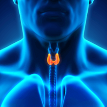 Thyroid & Parathyroid